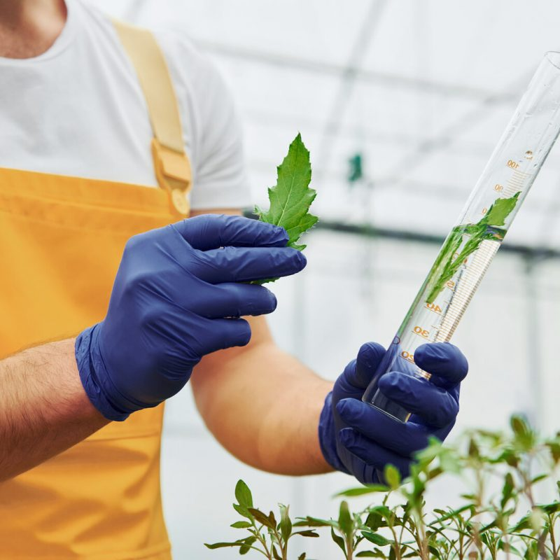 Holds test tube with plant and water inside of it. Young greenhouse worker in yellow uniform have job inside of hothouse.